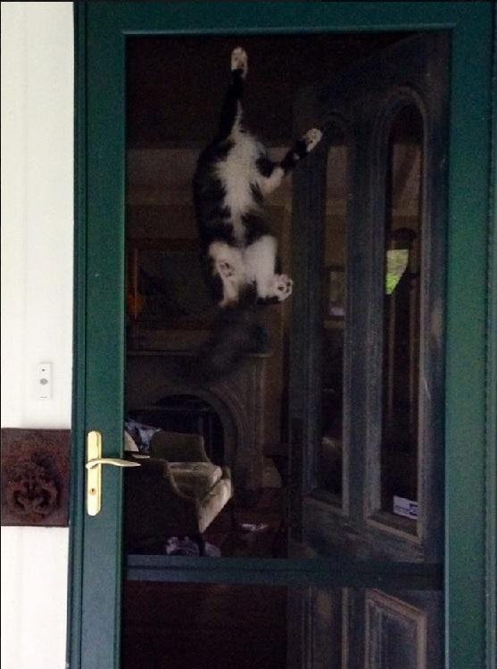 cat climb